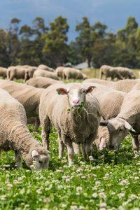 GRAZE on the brand new Coles lamb collection