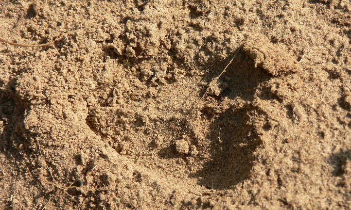 Enhancing the sandy soil: what it's and learn how to enhance the sandy soil