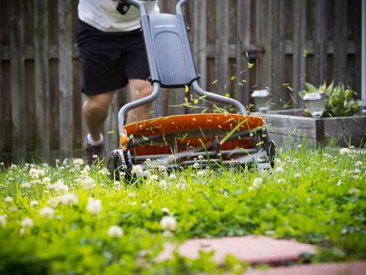 7 finest cylinder mowers on your garden in 2020