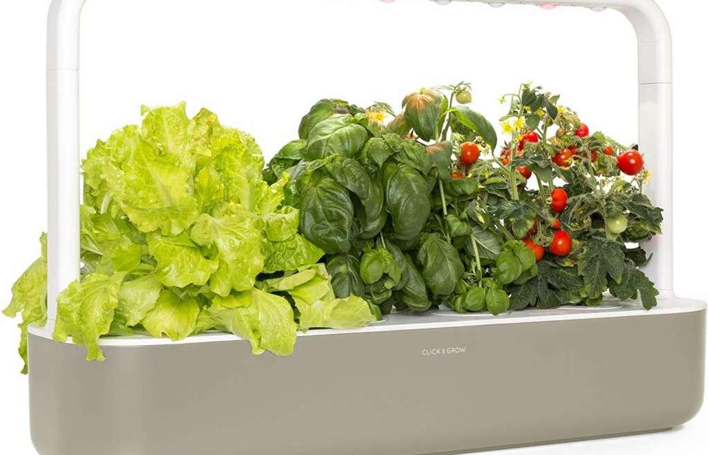 The very best indoor herb backyard kits (evaluation)