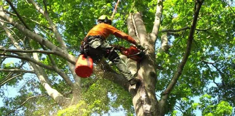 Recruitment of a tree care firm