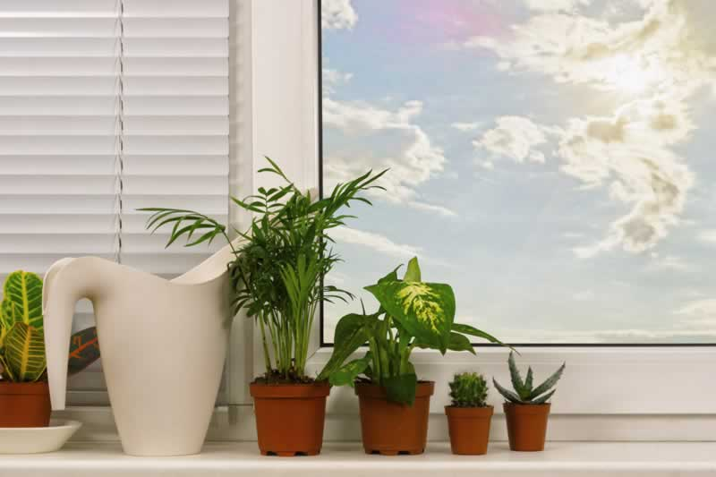 How to boost the look of your own home with plastic crops