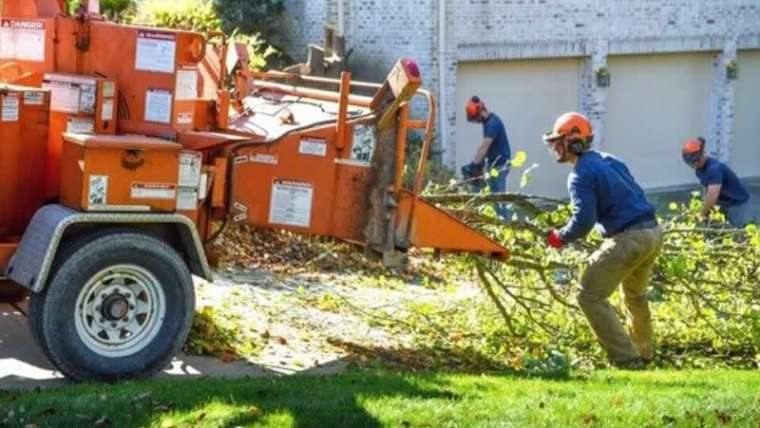 Find out how to discover the perfect tree care firm