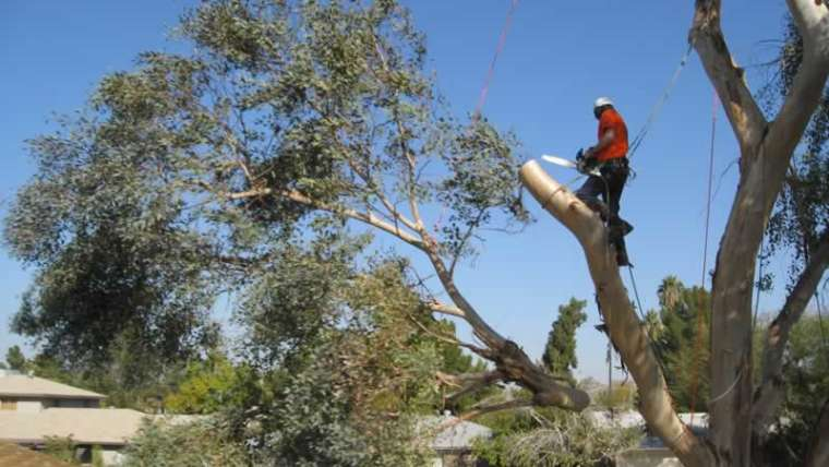 When to name an expert tree service for protected tree elimination