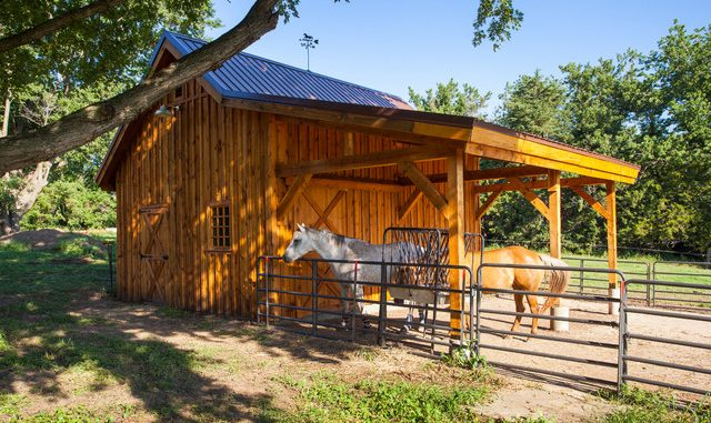 Artistic yard concepts to maintain your cattle protected