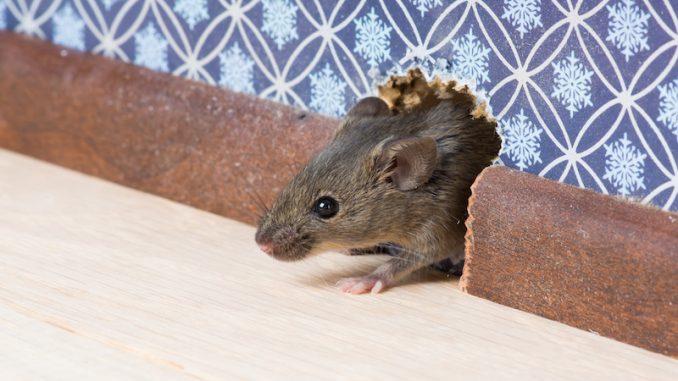 Summer time pest management tricks to hold pests at bay