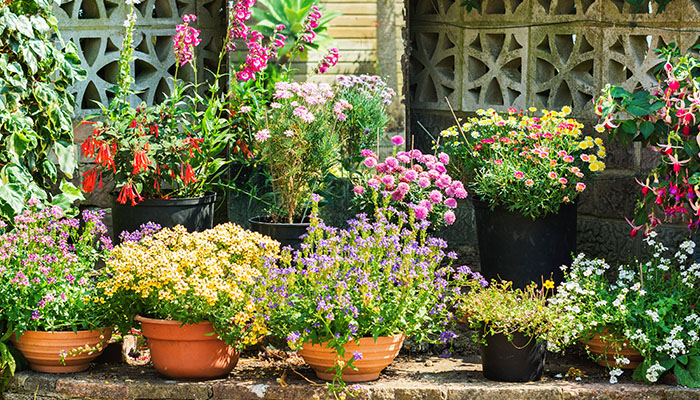 The perfect planters to your backyard (assessment)