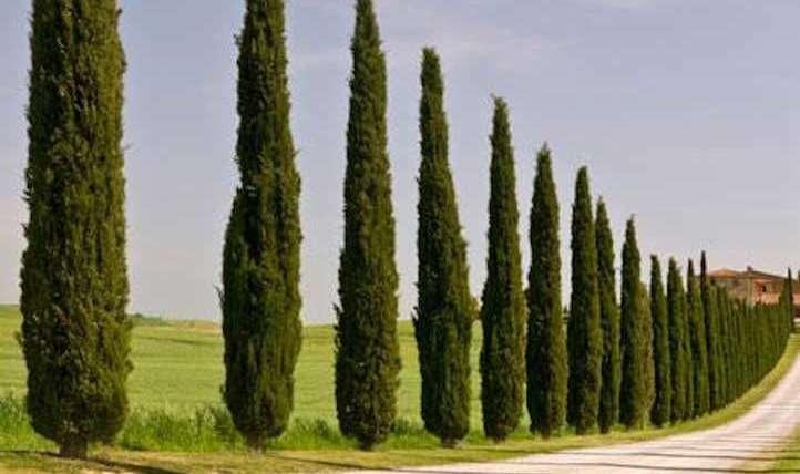 12 pillar bushes it's good to develop