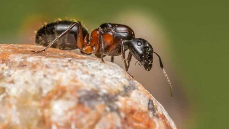 Indicators of a pest invasion in your property