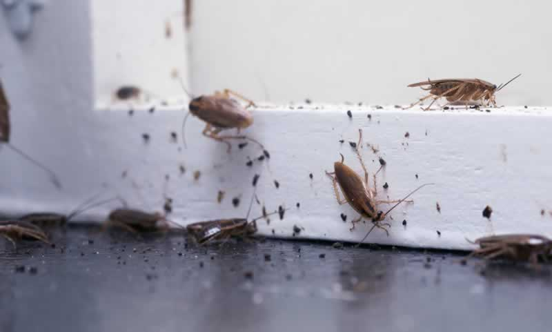Ideas for stopping a roach invasion