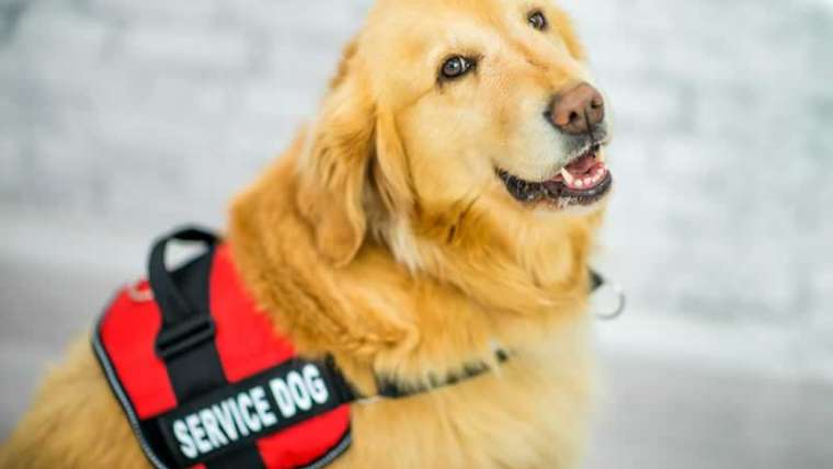 Are you a landlord? That you must know the next about service animals: