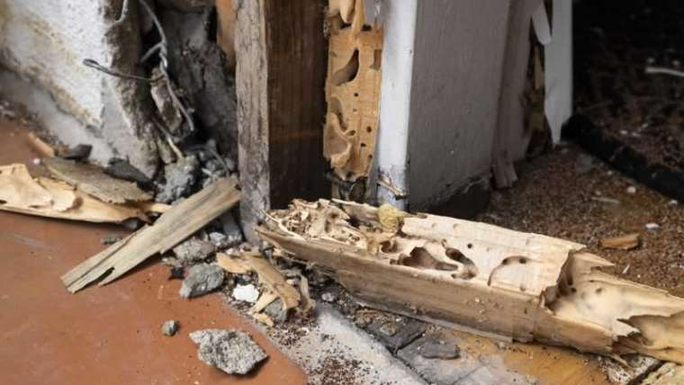 Preventive termite safety can save your house