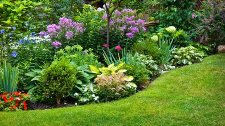 6 stunning shrubs so as to add to your panorama design