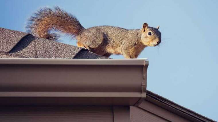 Will pests harm my roof? three indicators you might need an issue and how you can repair it