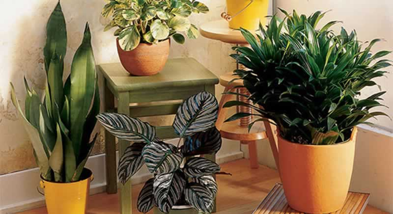 How one can humidify a room and not using a humidifier