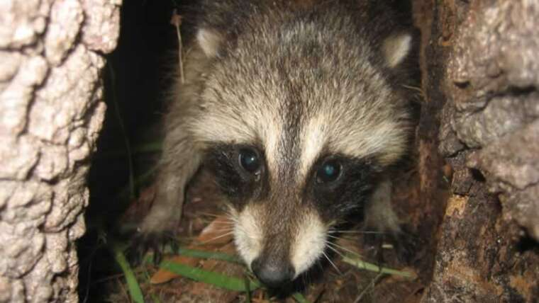 Find out how to hold wildlife and pests out of your backyard