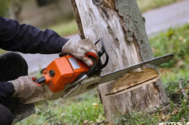 What's the greatest time of yr for tree elimination?