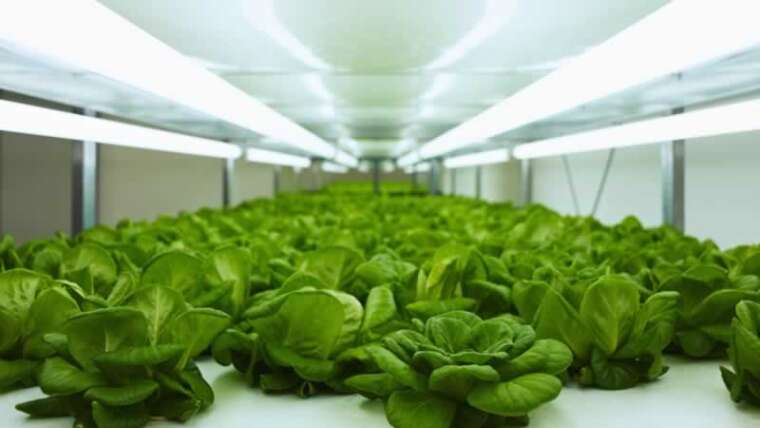 Indoor Gardening: Why Ought to You Develop Crops Below Develop Lights?