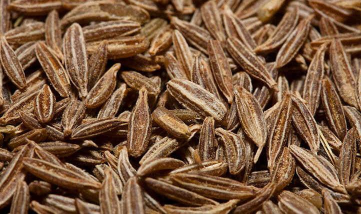 Rising cumin seeds to boost the backyard