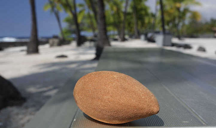 Mamey Sapote: An enormous tropical berry delight