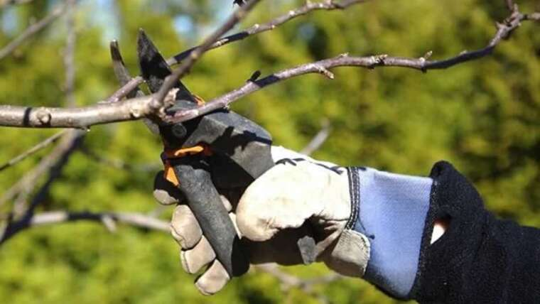 Would you prefer to prune a tree? Keep away from these 6 errors