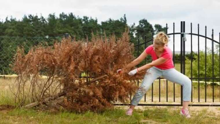 Landscaping Suggestions: The best way to Take away Bushes and Timber Close to You