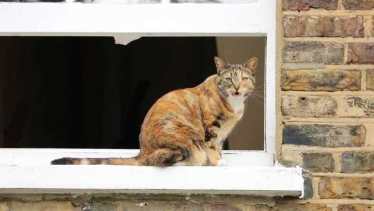 Useful renovation tasks that may make your pet's life simpler