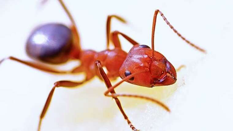 Methods to cope with ants infestation