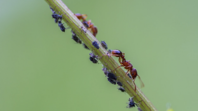 Indicators of an ant infestation to pay attention to