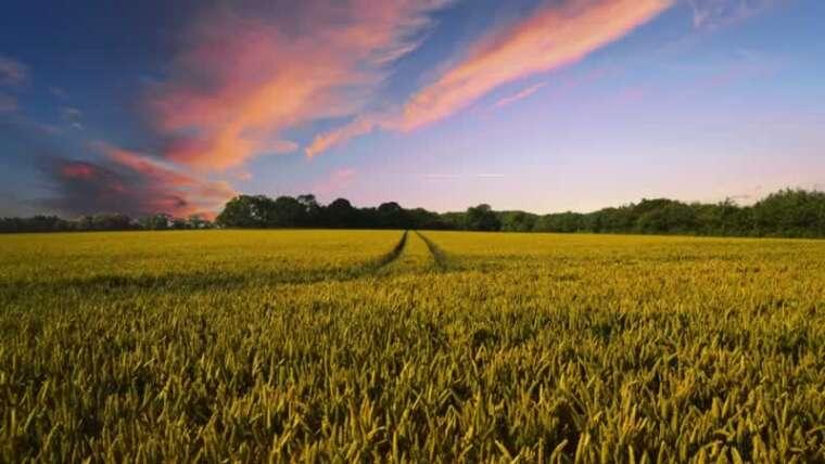 A budding farmer's information to beginning a farm