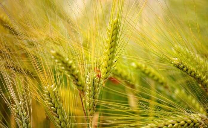 Harris Farm Markets promotes merchandise with regenerative agriculture