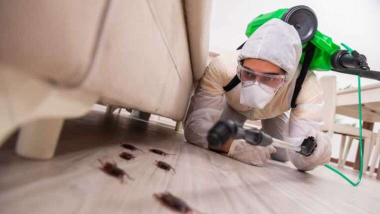 Turning On The Huge Weapons: When Is It Time To Get Pest Management?