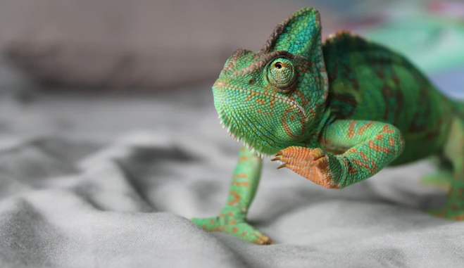 four Issues You Ought to Know When Getting a Reptile Pet