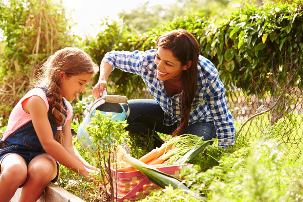 How to achieve success as a first-time gardener