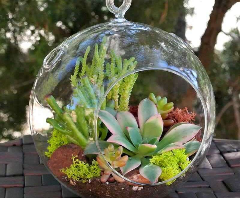 A shopping for information for succulents