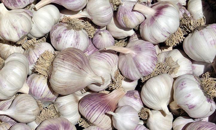 Garlic Companion Crops: Good Allium Neighbors