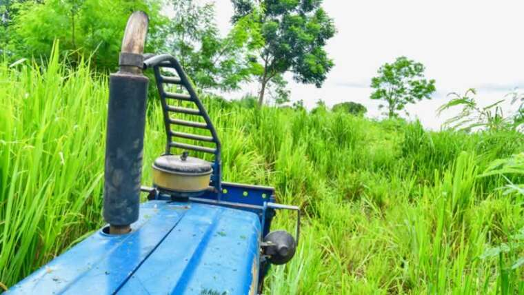 That is the simple method to overcome overgrown land