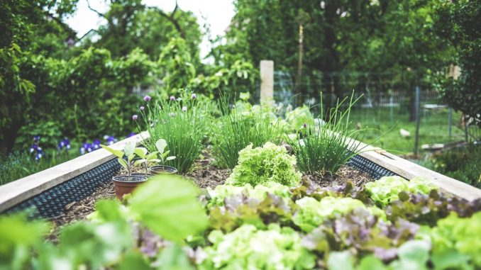 The best way to hold the pests out of backyard areas