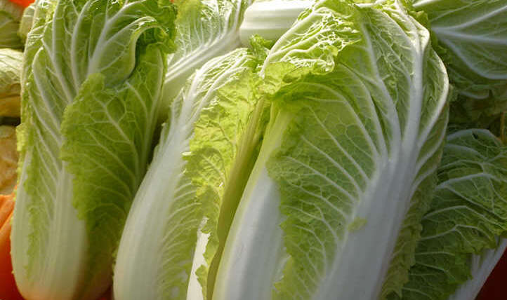 Methods to develop napa cabbage in your beds
