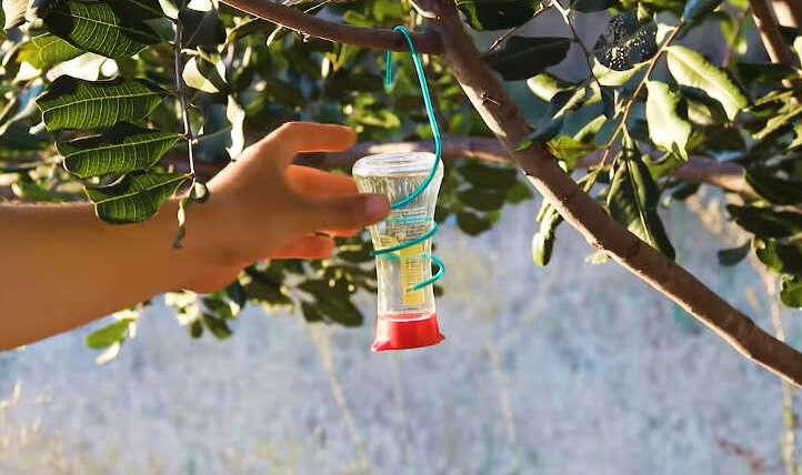 DIY Hummingbird Feeder: four Straightforward Designs