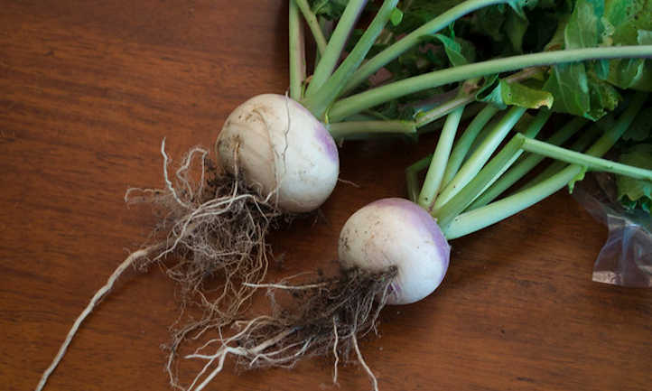 The best way to develop beets in your backyard
