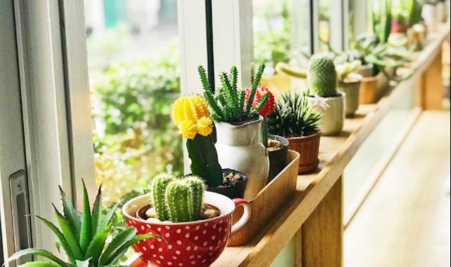 Lighting wants for indoor vegetation