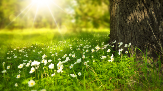 6 essential suggestions for selecting a backyard weed killer