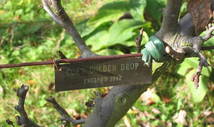 Plum Tree Species: A World of Drupes