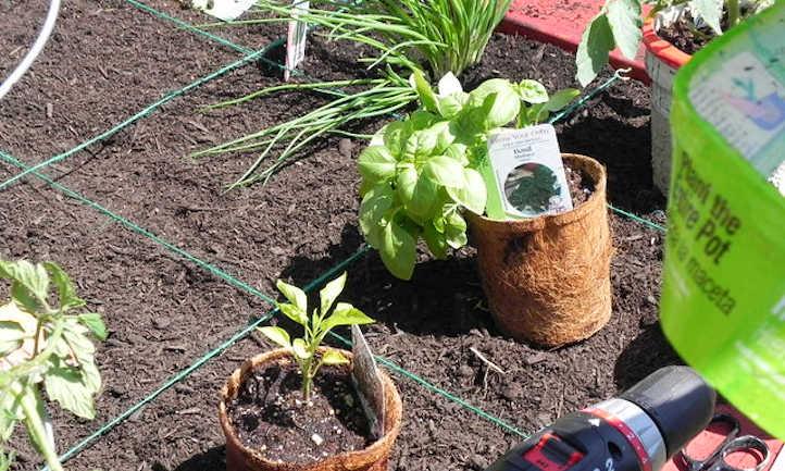 Pepper Companion Vegetation: Produce Buddy
