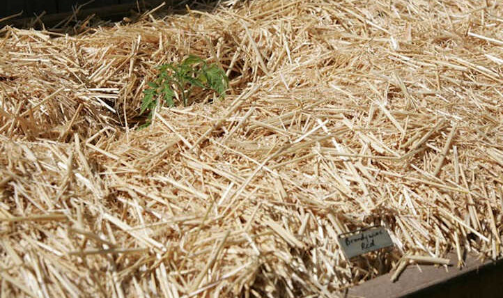 Sorts of Mulch: Selecting the Proper Mulch