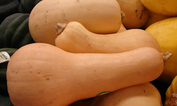 When to reap butternut squash and the way to retailer it