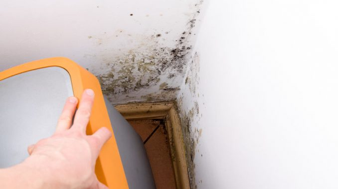 High explanation why it's best to name skilled mould remediation corporations