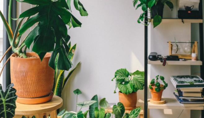 three ideas for indoor gardening