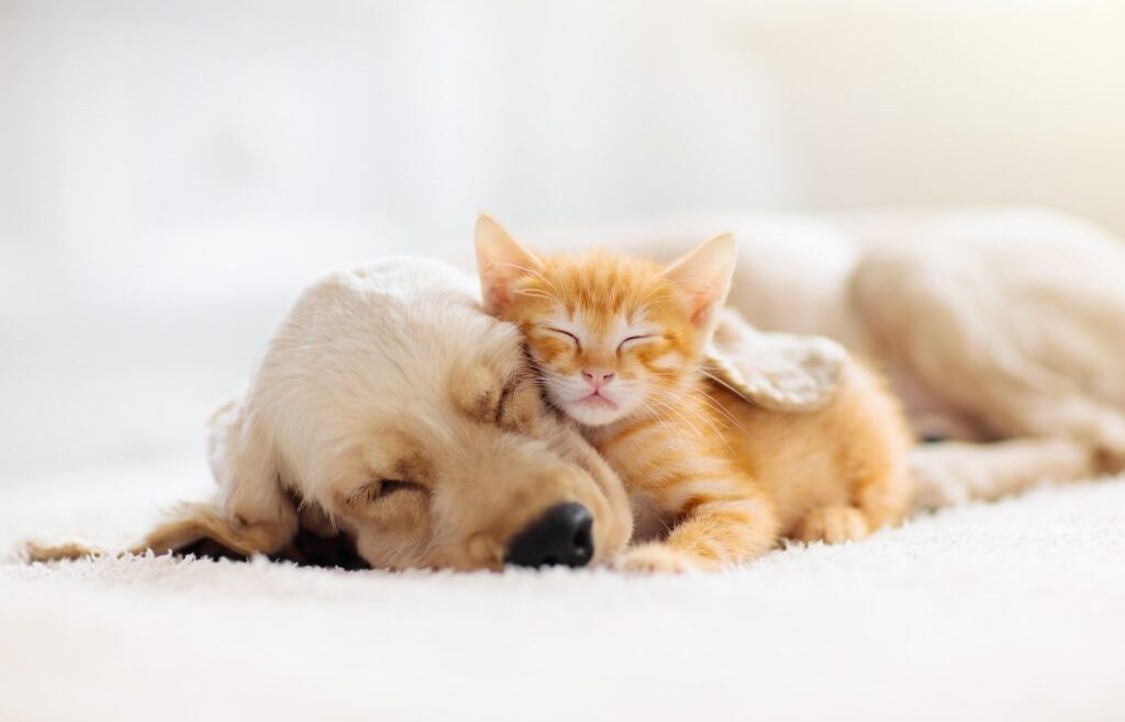 A brand new era of pet homeowners